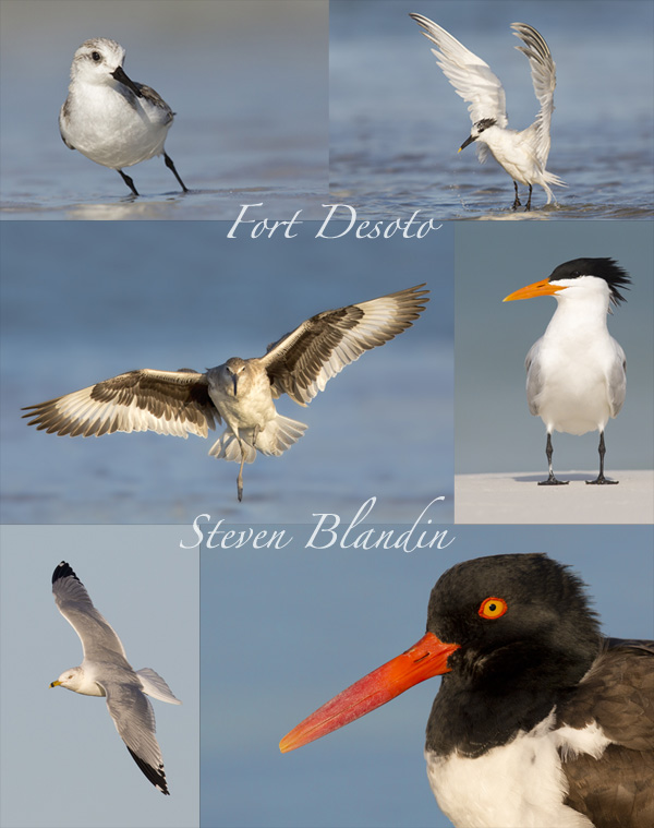 Photography workshop at Fort Desoto