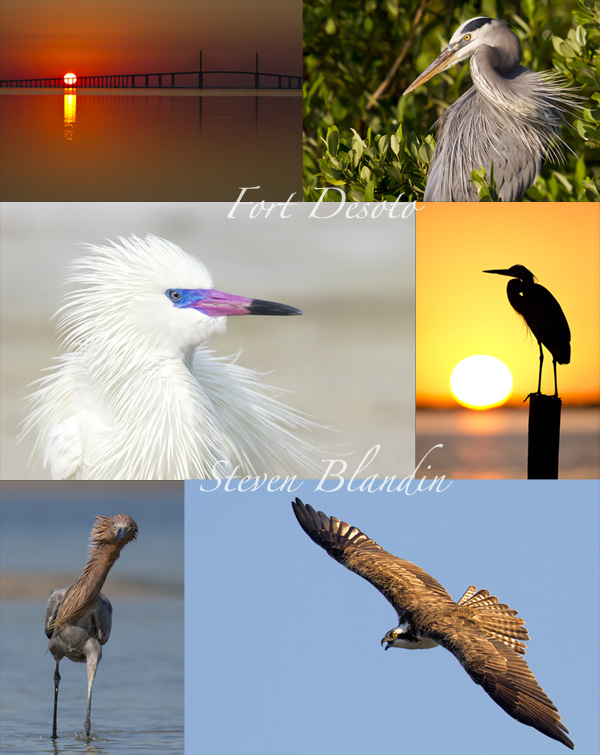 Fort Desoto wildlife photography tour