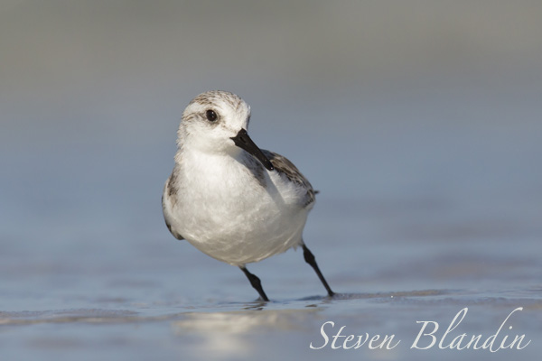 Sanderling Fort Desoto, Florida