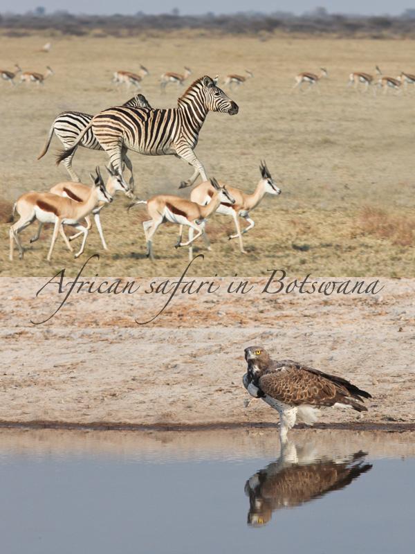 Nxai Pan - Botswana