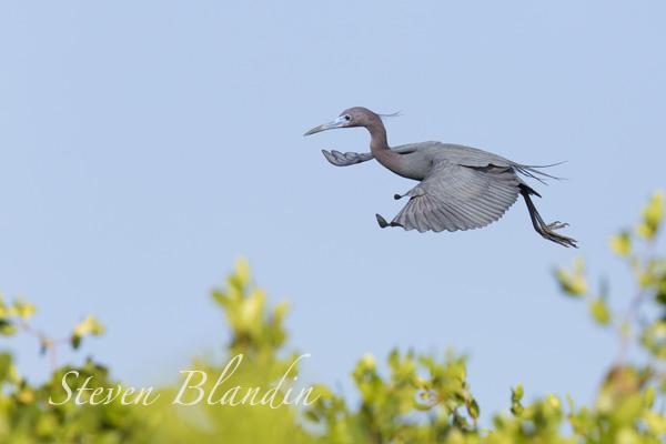 Bird in flight photography workshop - Florida