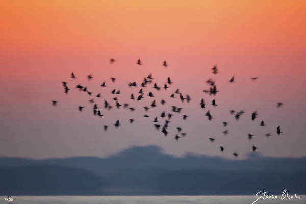 Flock motion - Fine Art Photography