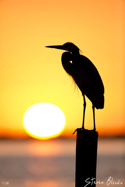 Sunset Silhouette - Fine Art Photography