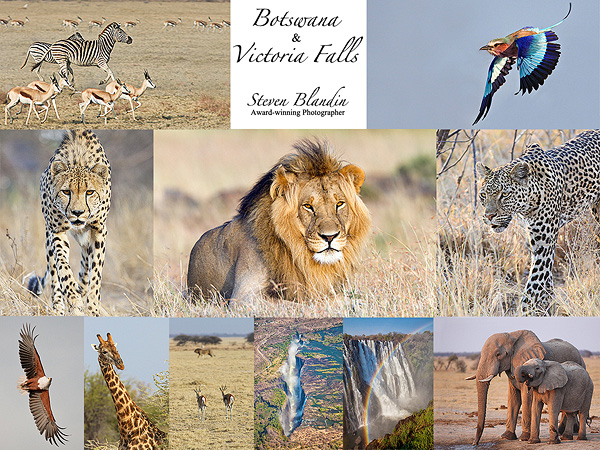 Wildlife photography tour - Botswana African safari