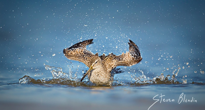 Flying In The Water - International Award