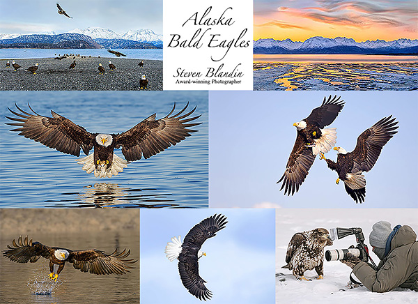Photography Workshop - Alaska Bald Eagles 2016