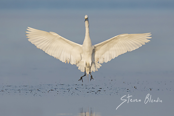 Canon 7d Mark Ii Bird Wildlife Photography Blog