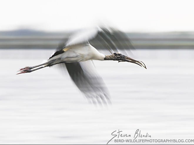 Wood Stork in flight - Canon 70-200mm f/2.8 IS II