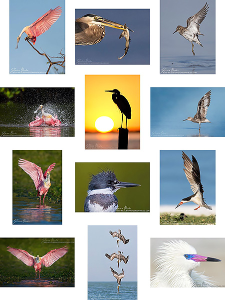 Instagram for Bird & Wildlife Phtoography