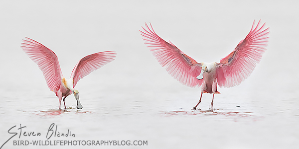 BBC Wildlife Photographer Of The Year final round - Wings Up