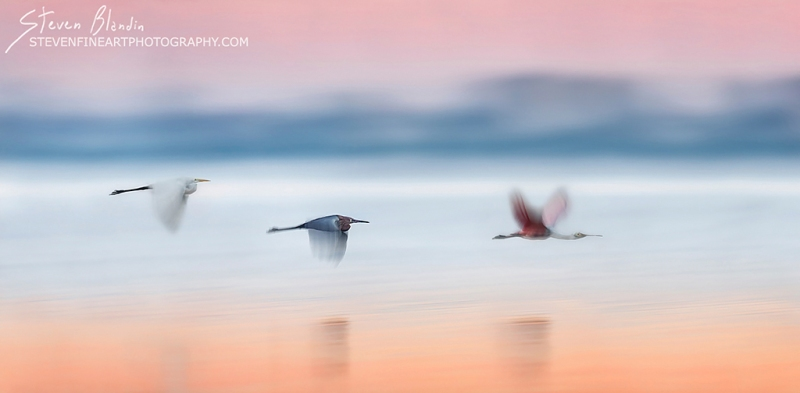 Pan Blur_Florida Bird Photography
